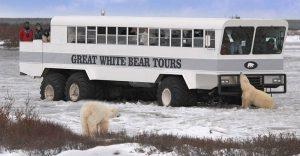 丘吉尔 北极熊.jpg